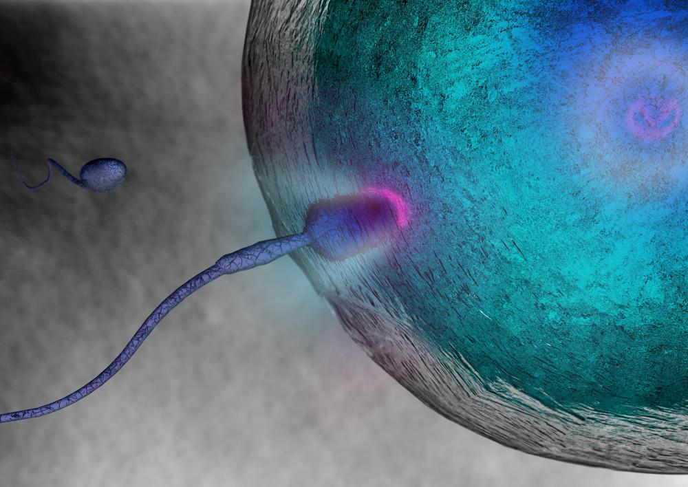 The formation of an embryo starts at fertilization.