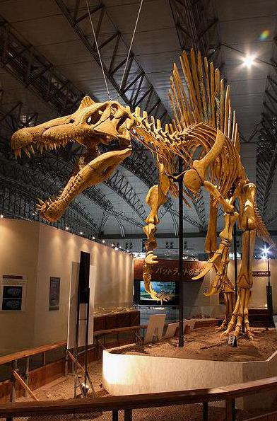 The 59 ft long Spinosaurus primarily ate fish.
