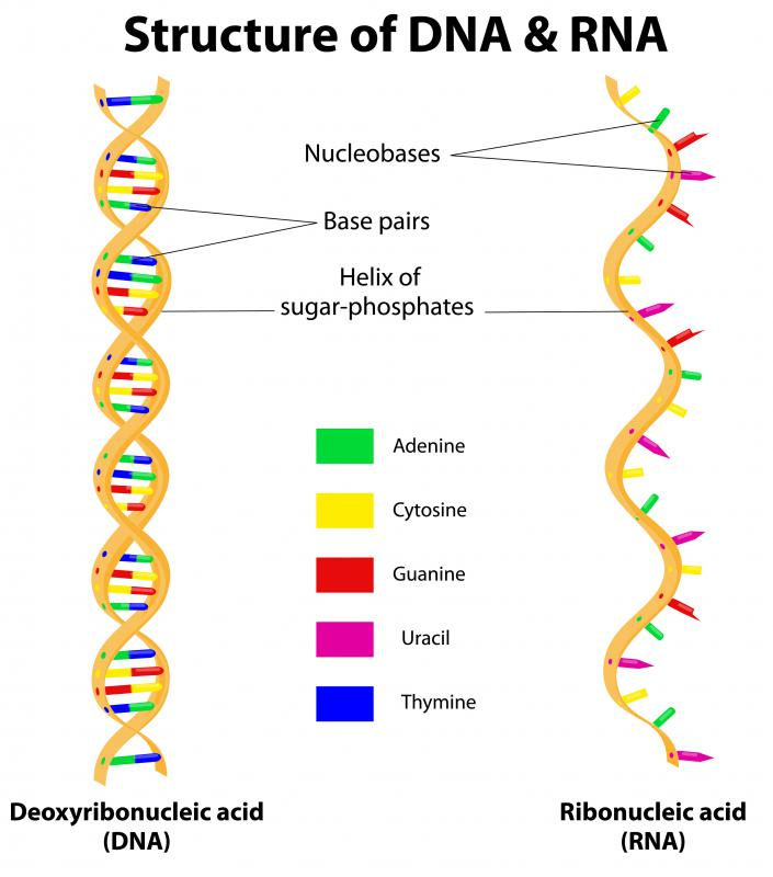 Instructions for protein synthesis is contained in DNA.