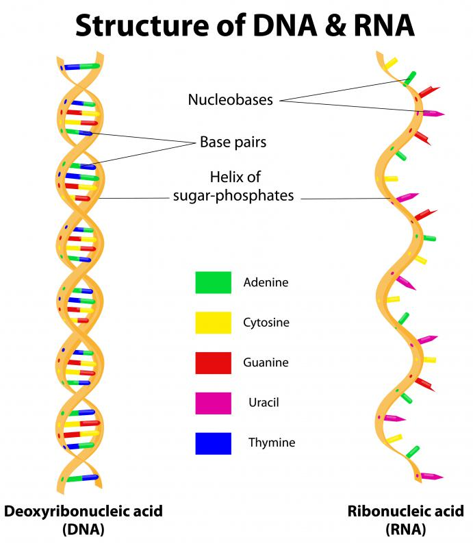 RNA hybridization happens when one RNA strand combines, or hybridizes, with either another RNA strand or a deoxyribonucleic acid (DNA) strand.