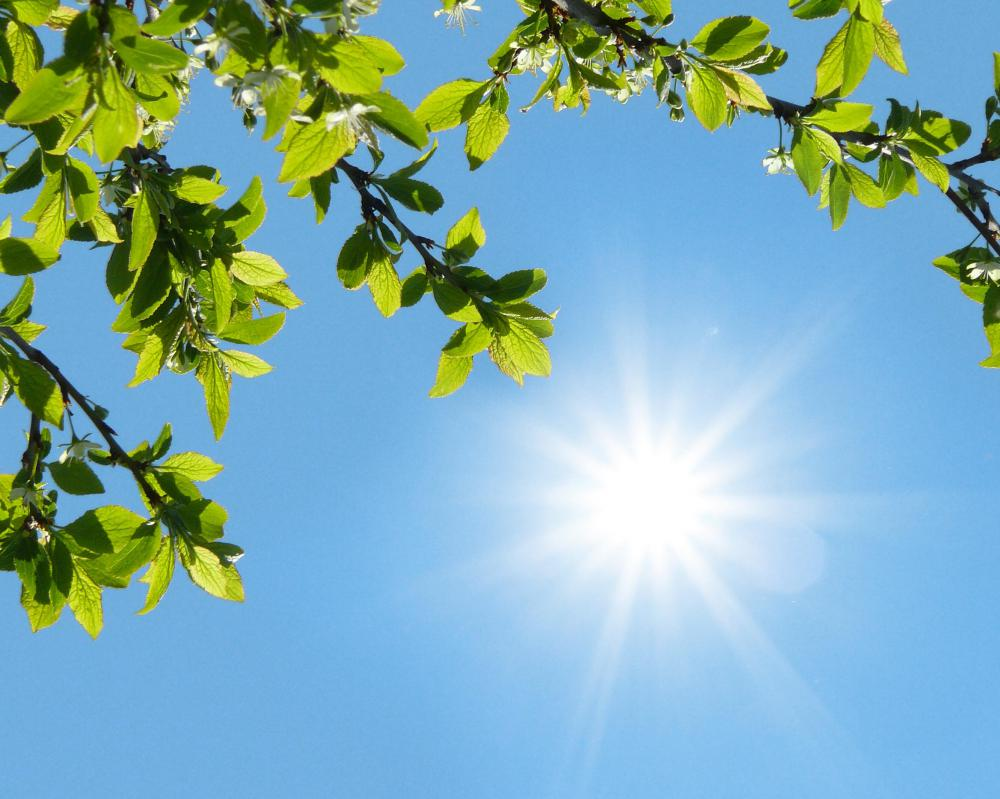 Weather conditions, including intense sunshine, can dry the scalp.