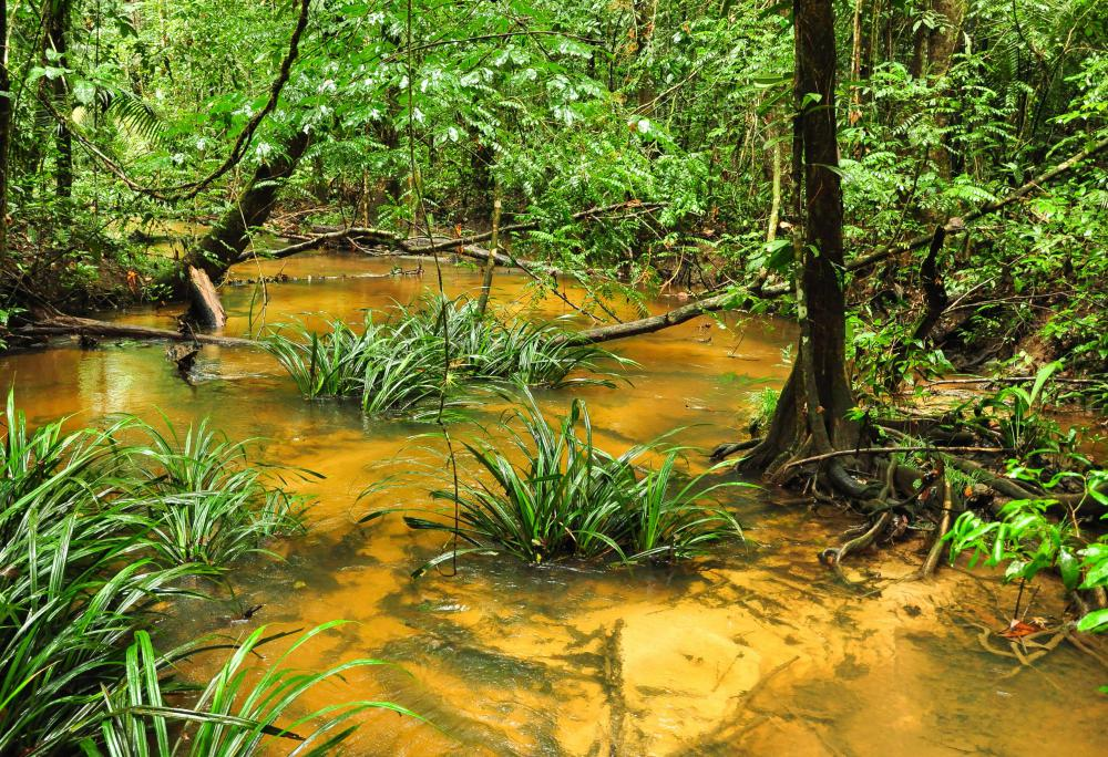Swamps and other wetlands produce methane.