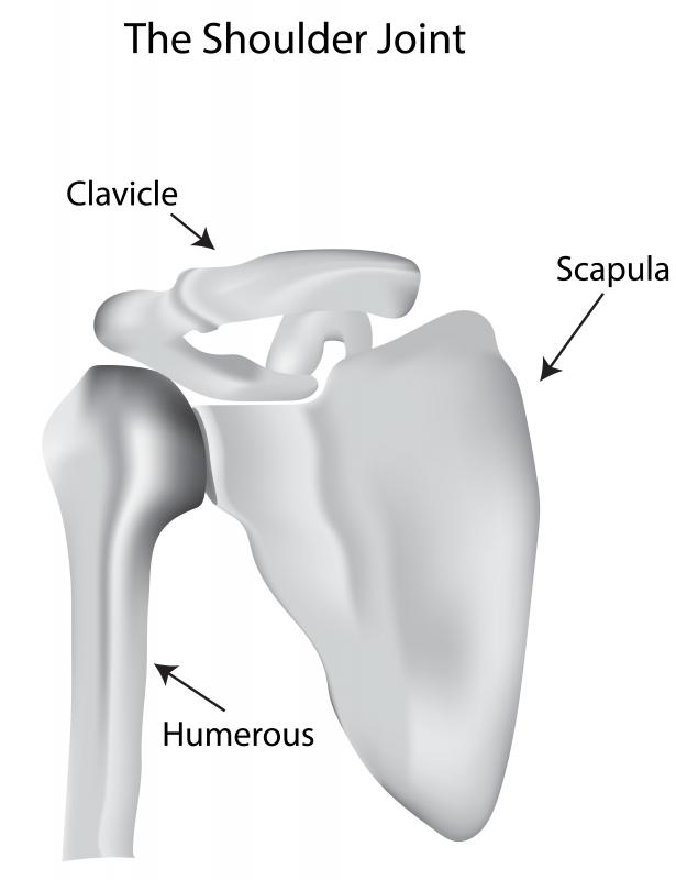 The AC joint connects the clavicle with the scapula.