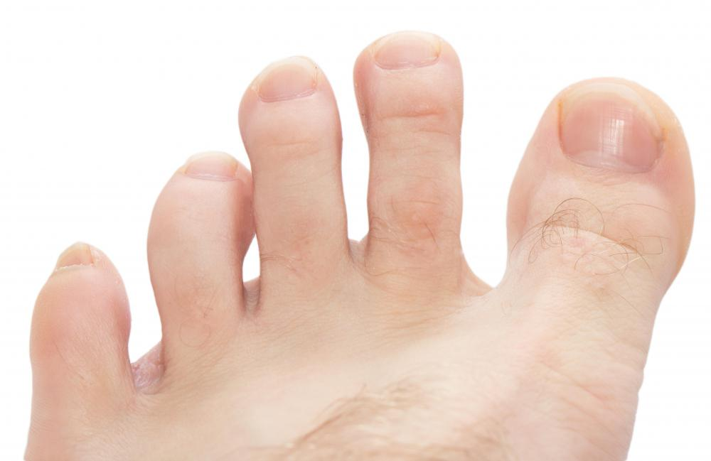 The dorsal digital nerves cross the top surface and insert in the toes.