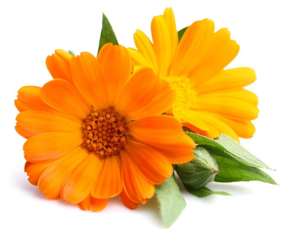 Flowers associated with Mary include marigolds, which are often planted in a Mary Garden.