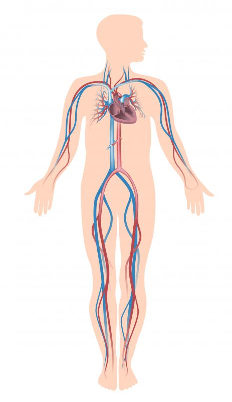 Vascular dysfunction involves blood vessel problems in the vascular system.