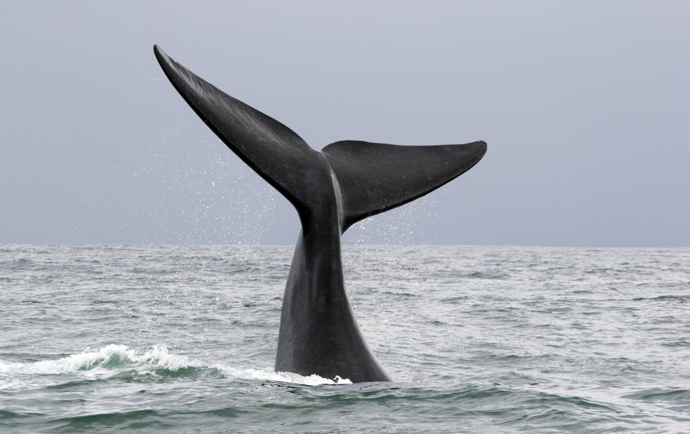 Numerous animals, including whales, use infrasound to communicate.