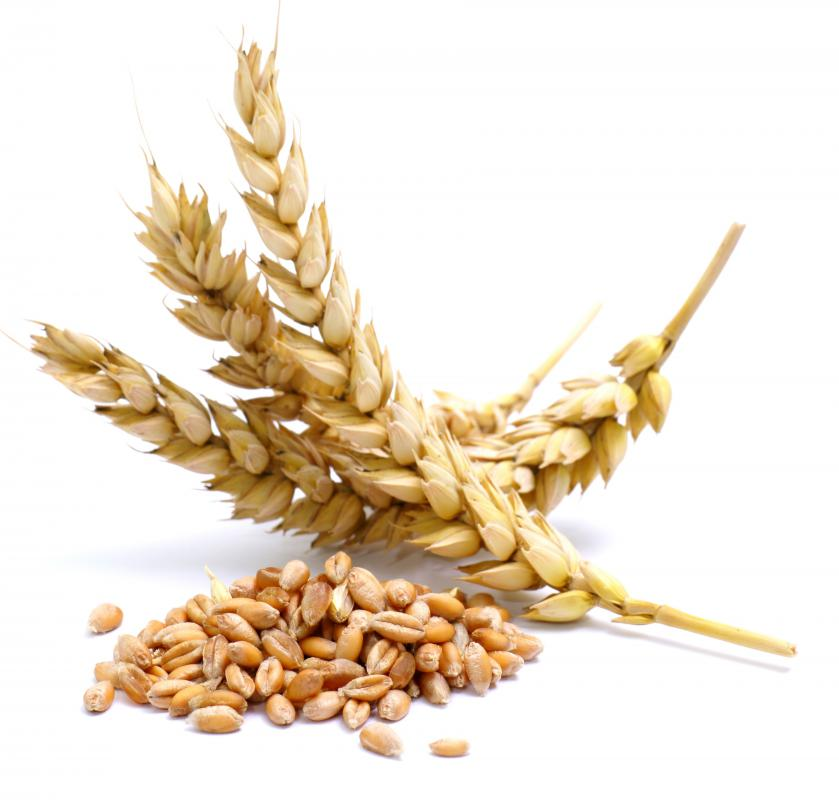 Wheat was the first basic agricultural crop.