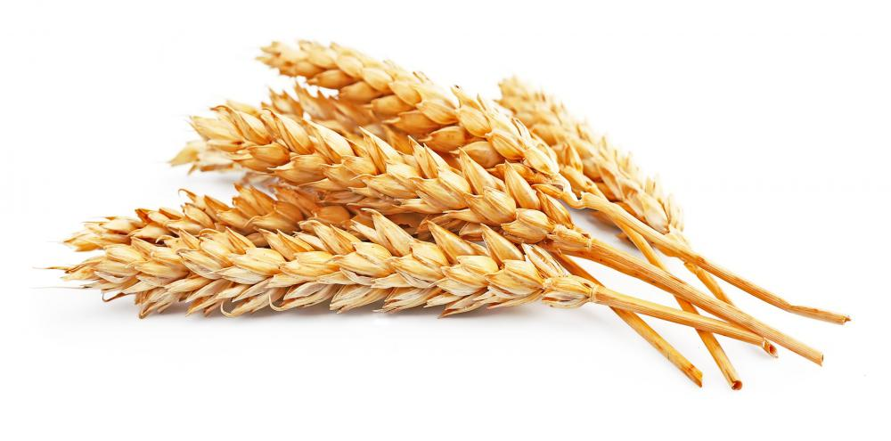 Whole grains contain polysaccharides.