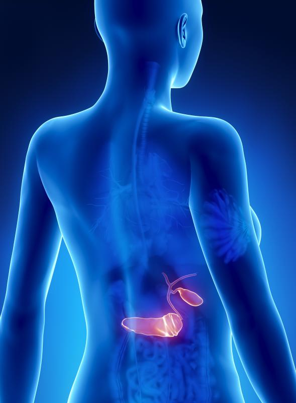 Pancreatic elastase is a protein produced by the pancreas to help break down food remains.